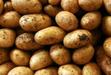 Photo of Potatoes Are Packed With Great Nutrition
